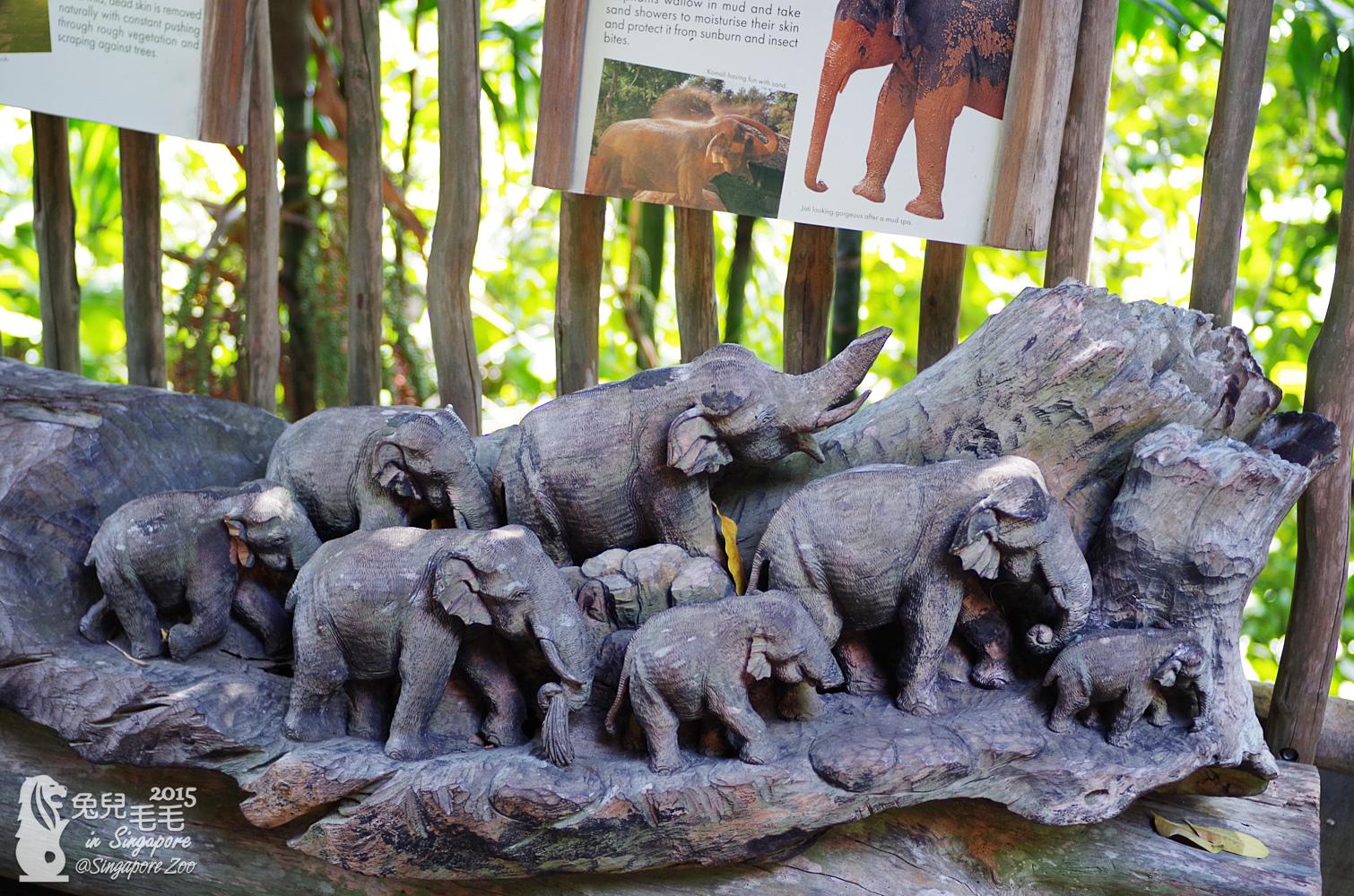 0218-Singapore Zoo-27.jpg