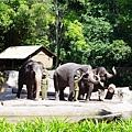 0218-Singapore Zoo-29.jpg