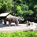 0218-Singapore Zoo-30.jpg