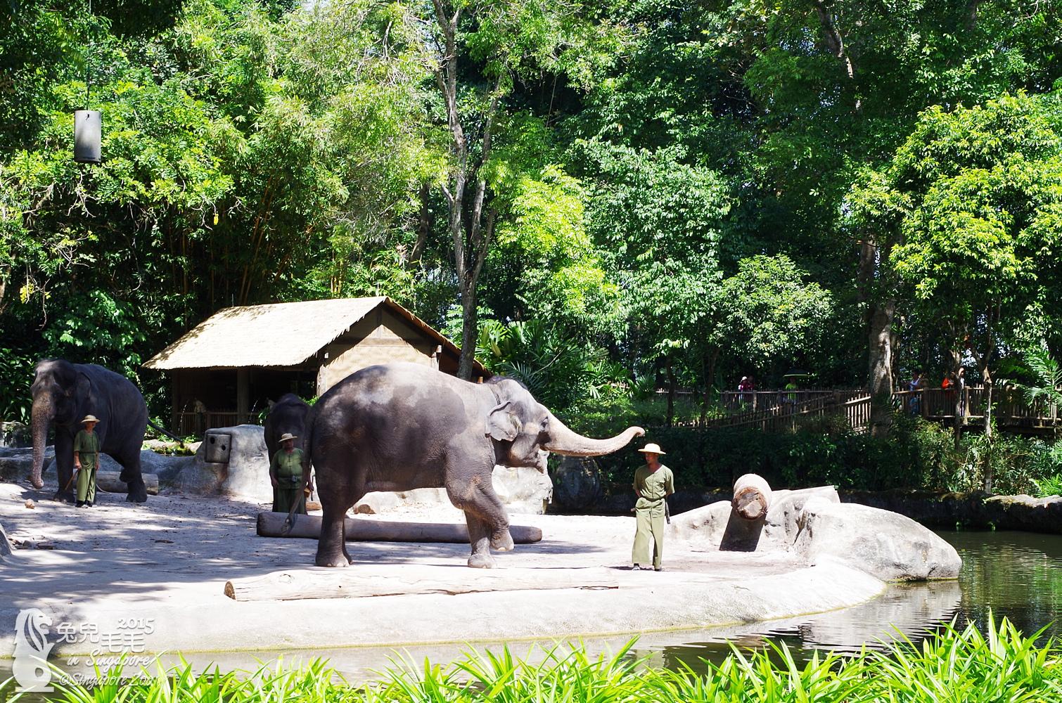 0218-Singapore Zoo-31.jpg