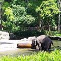 0218-Singapore Zoo-32.jpg