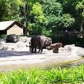 0218-Singapore Zoo-34.jpg
