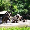 0218-Singapore Zoo-35.jpg