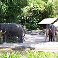 0218-Singapore Zoo-36.jpg
