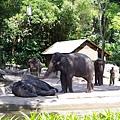 0218-Singapore Zoo-37.jpg