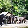 0218-Singapore Zoo-38.jpg