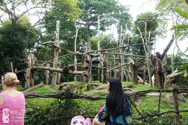 0218-Singapore Zoo-44.jpg