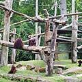 0218-Singapore Zoo-45.jpg
