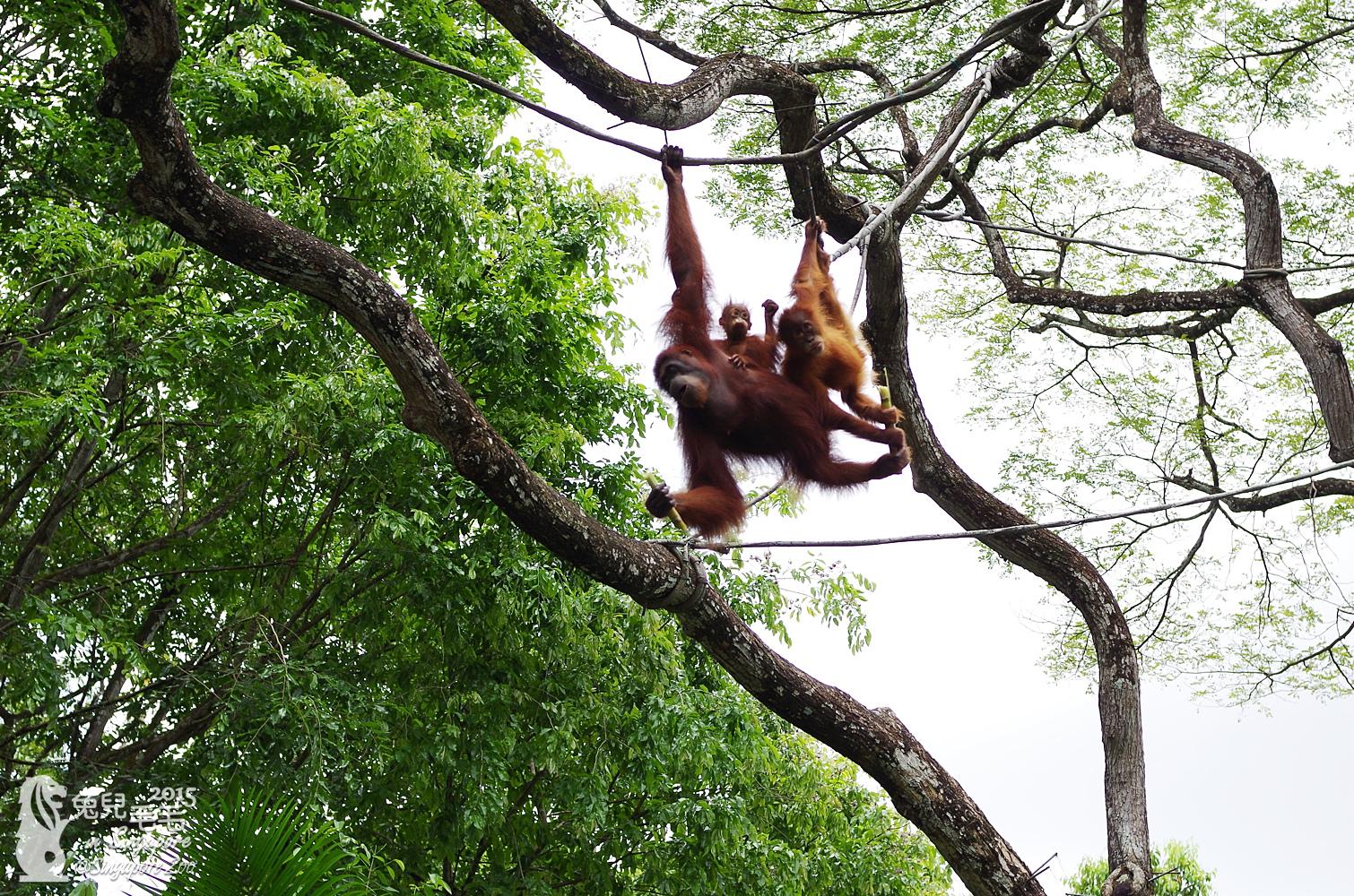 0218-Singapore Zoo-46.jpg