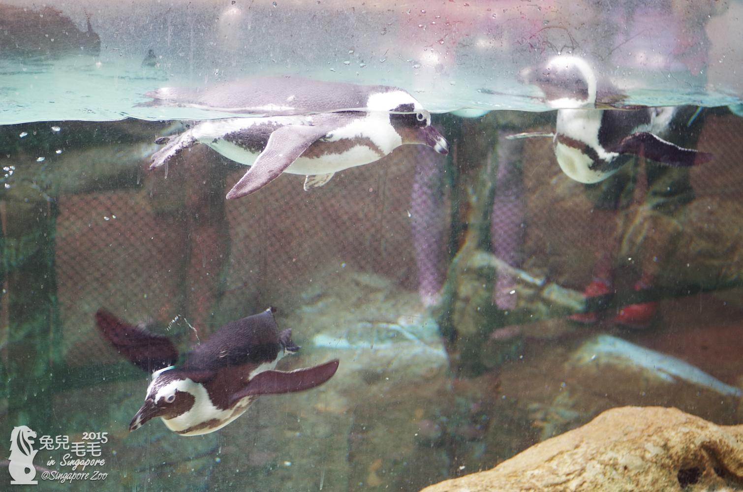 0218-Singapore Zoo-47.jpg