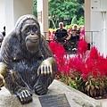 0218-Singapore Zoo-53.jpg