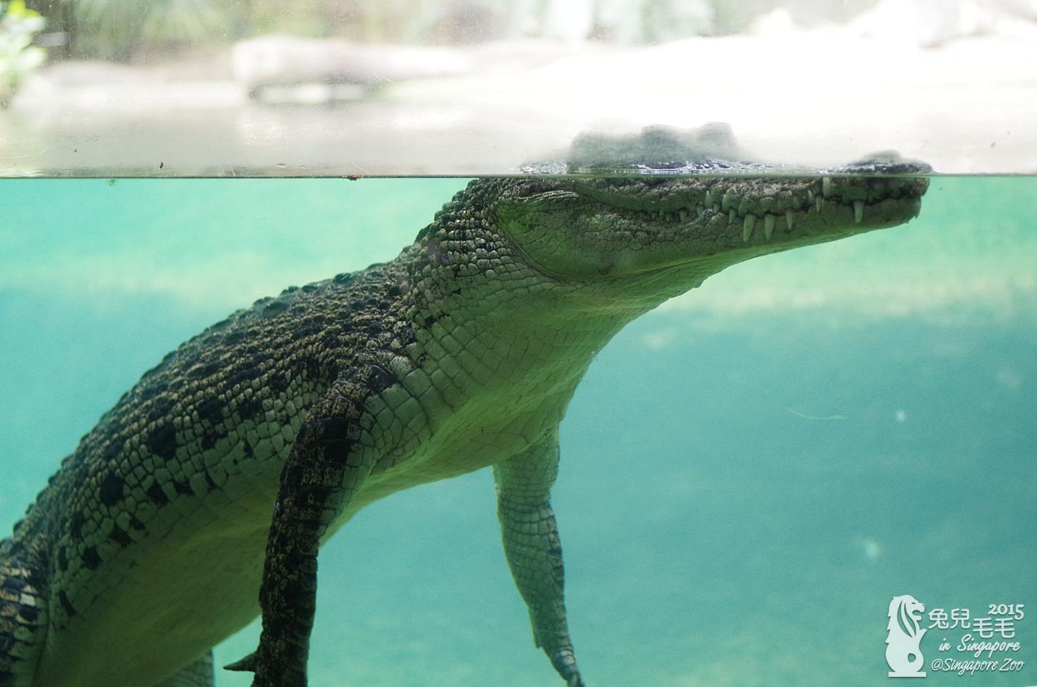 0218-Singapore Zoo-55.jpg