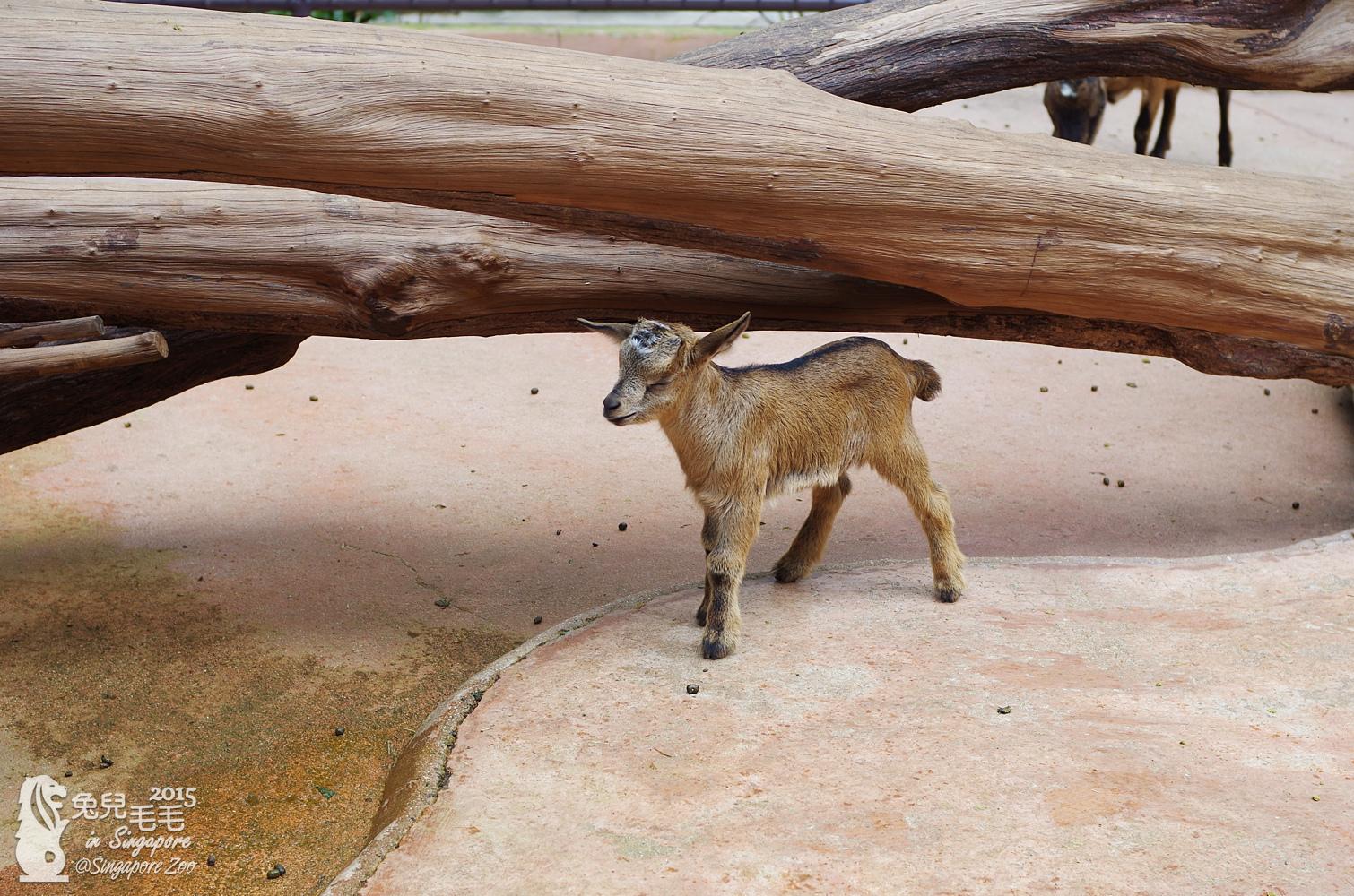 0218-Singapore Zoo-63.jpg