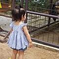 0218-Singapore Zoo-65.jpg