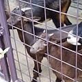 0218-Singapore Zoo-66.jpg