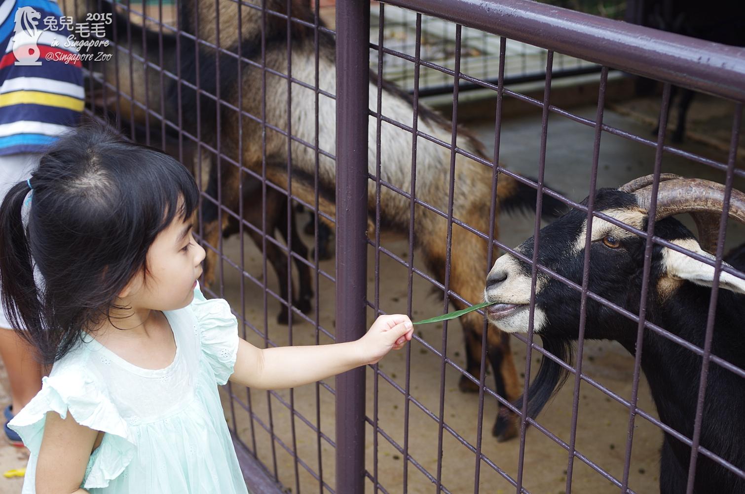 0218-Singapore Zoo-67.jpg