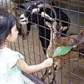 0218-Singapore Zoo-68.jpg