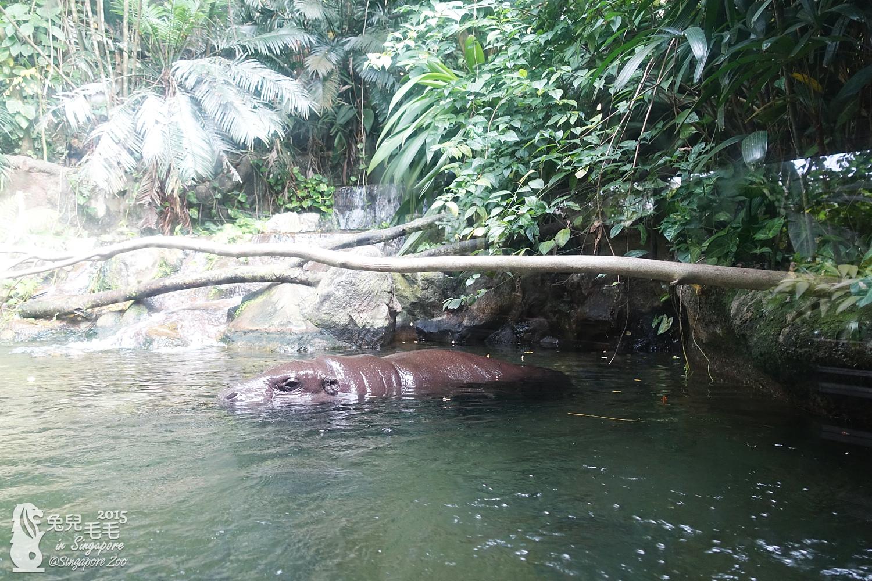 0218-Singapore Zoo-83.jpg