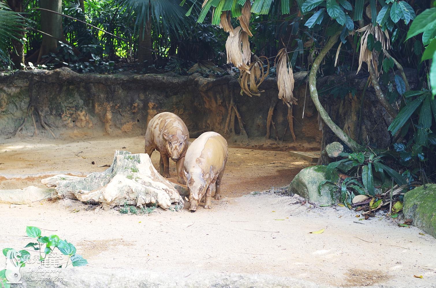 0218-Singapore Zoo-87.jpg