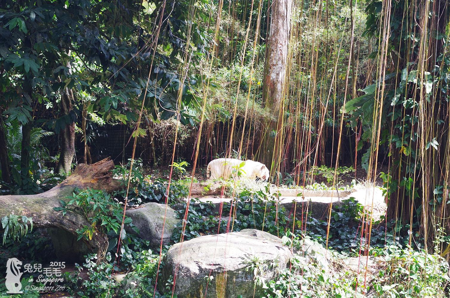 0218-Singapore Zoo-88.jpg