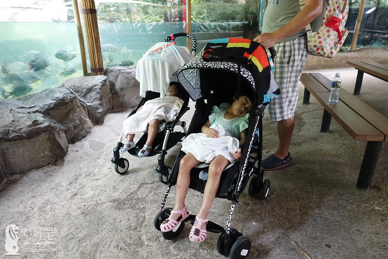0218-Singapore Zoo-91.jpg