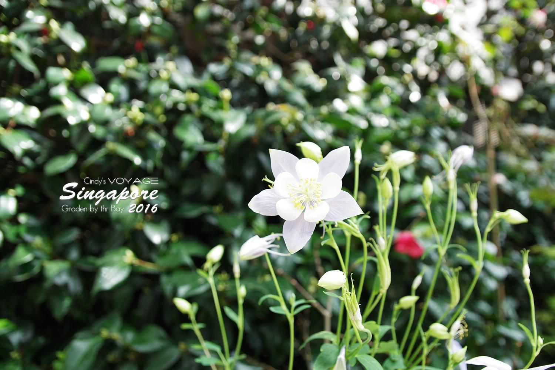 2016-Garden By the Bay-133.jpg