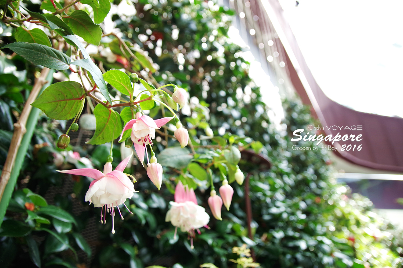 2016-Garden By the Bay-134.jpg