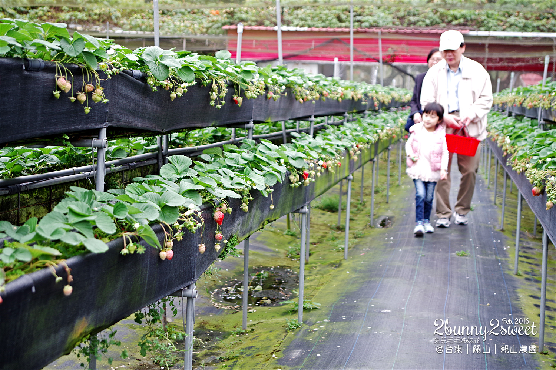 2016-0228-親山農園-04.jpg