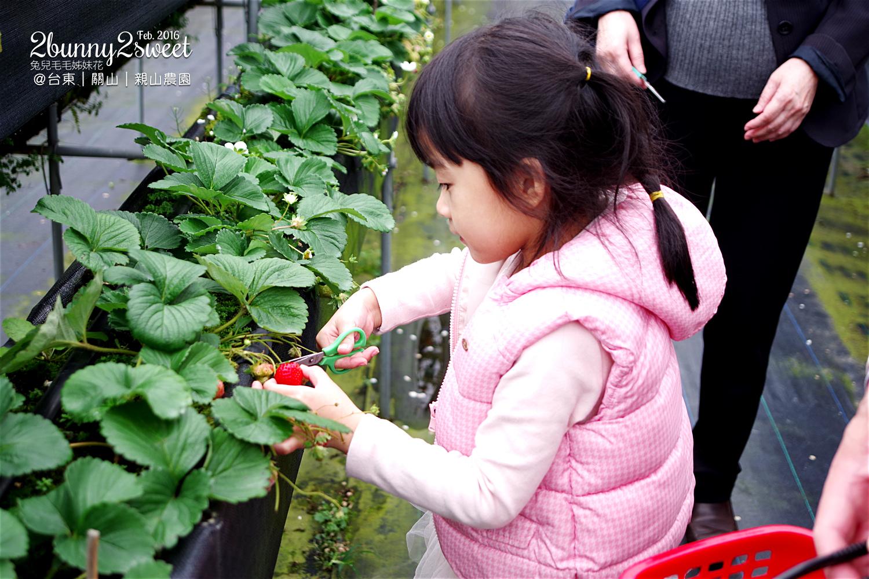 2016-0228-親山農園-05.jpg