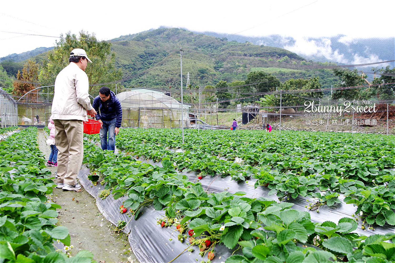 2016-0228-親山農園-09.jpg