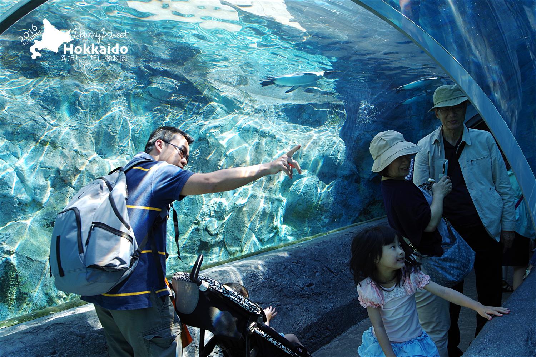 2016-0629-旭山動物園-11.jpg