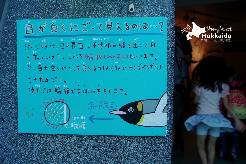2016-0629-旭山動物園-12.jpg