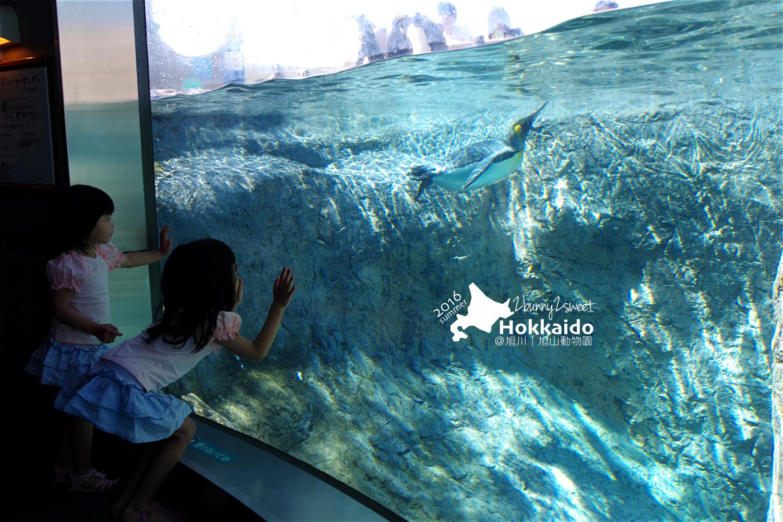 2016-0629-旭山動物園-17.jpg