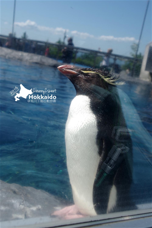 2016-0629-旭山動物園-18.jpg