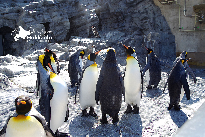 2016-0629-旭山動物園-24.jpg