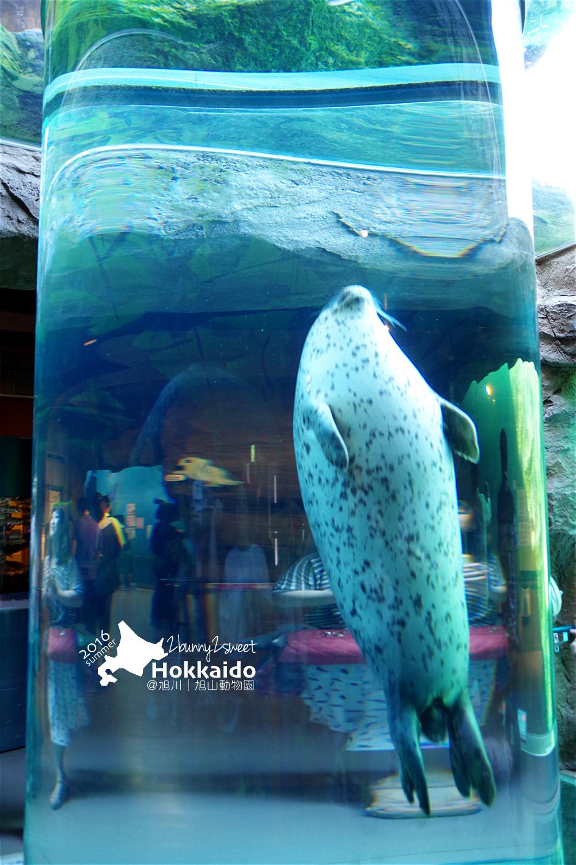 2016-0629-旭山動物園-28.jpg