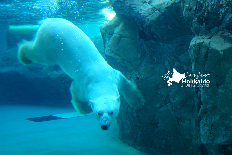 2016-0629-旭山動物園-47.jpg