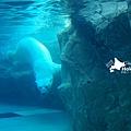 2016-0629-旭山動物園-49.jpg