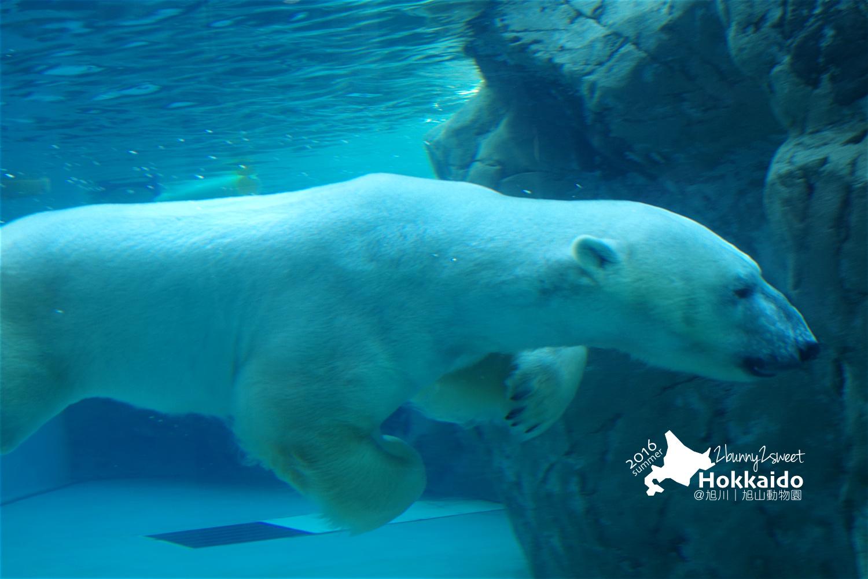 2016-0629-旭山動物園-50.jpg