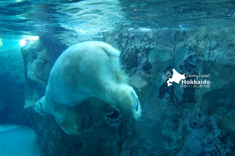 2016-0629-旭山動物園-51.jpg