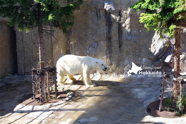 2016-0629-旭山動物園-53.jpg