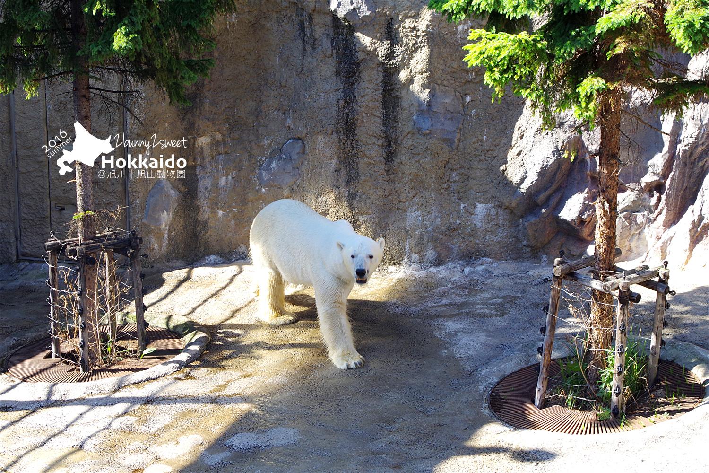 2016-0629-旭山動物園-54.jpg