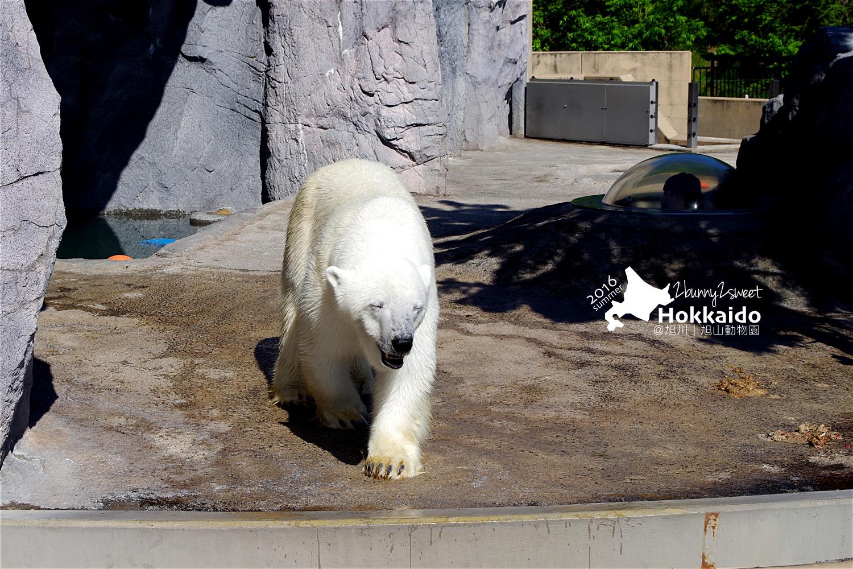 2016-0629-旭山動物園-55.jpg