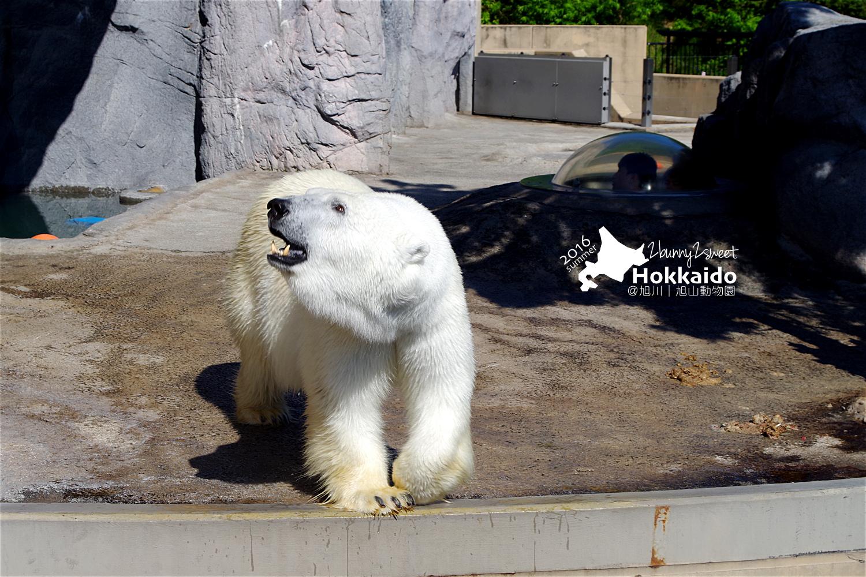 2016-0629-旭山動物園-56.jpg
