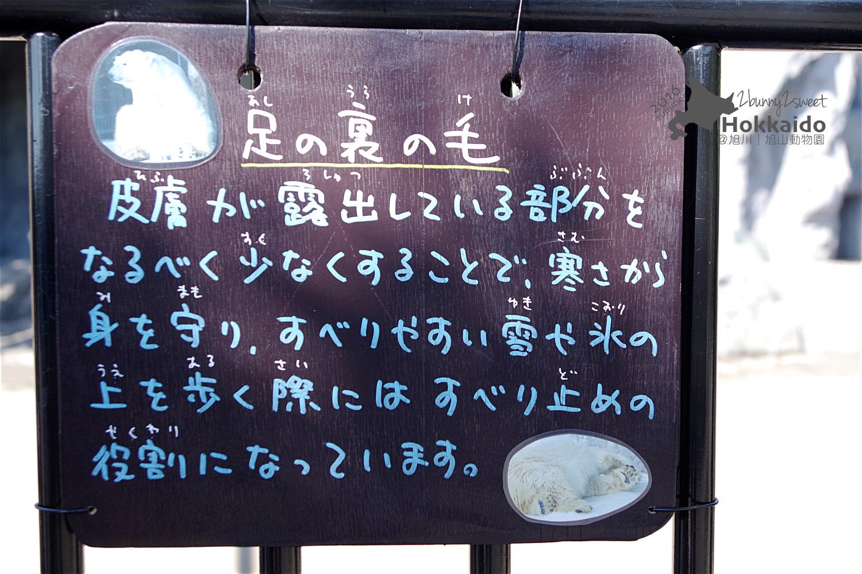 2016-0629-旭山動物園-61.jpg