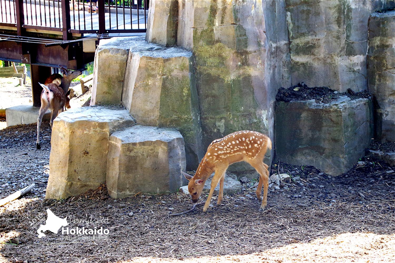 2016-0629-旭山動物園-66.jpg