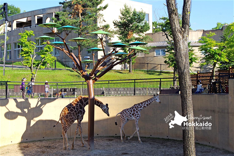 2016-0629-旭山動物園-91.jpg