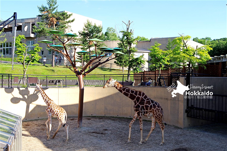 2016-0629-旭山動物園-93.jpg