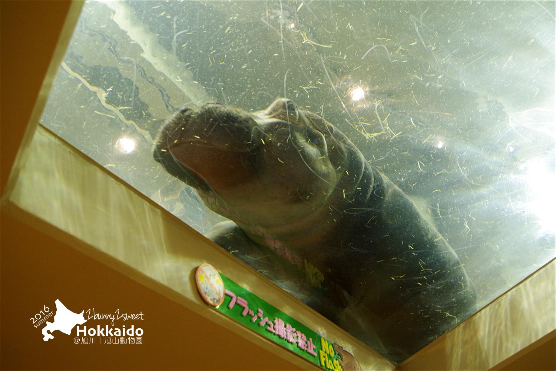 2016-0629-旭山動物園-98.jpg