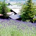 2016-0701-富田農場-02.jpg